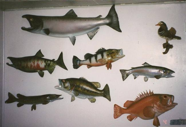 fish reproductions